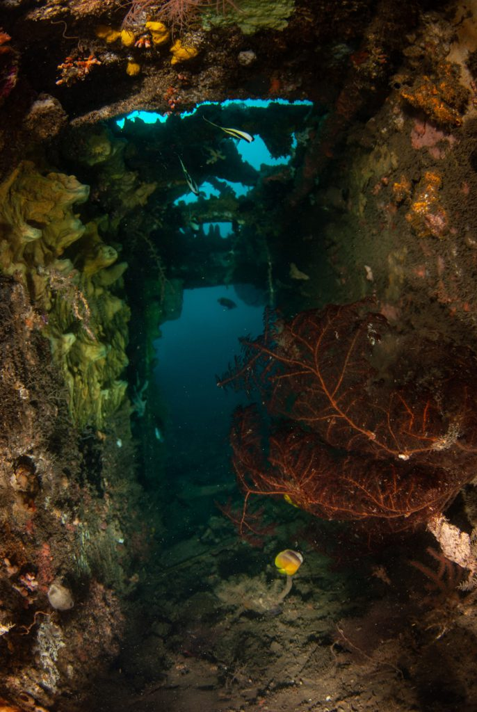 A peek inside… — wreck diving North Sulawesi
