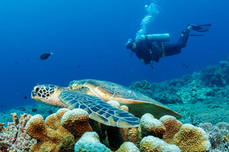 Diver hovering above a turtle on the corals at Bunaken