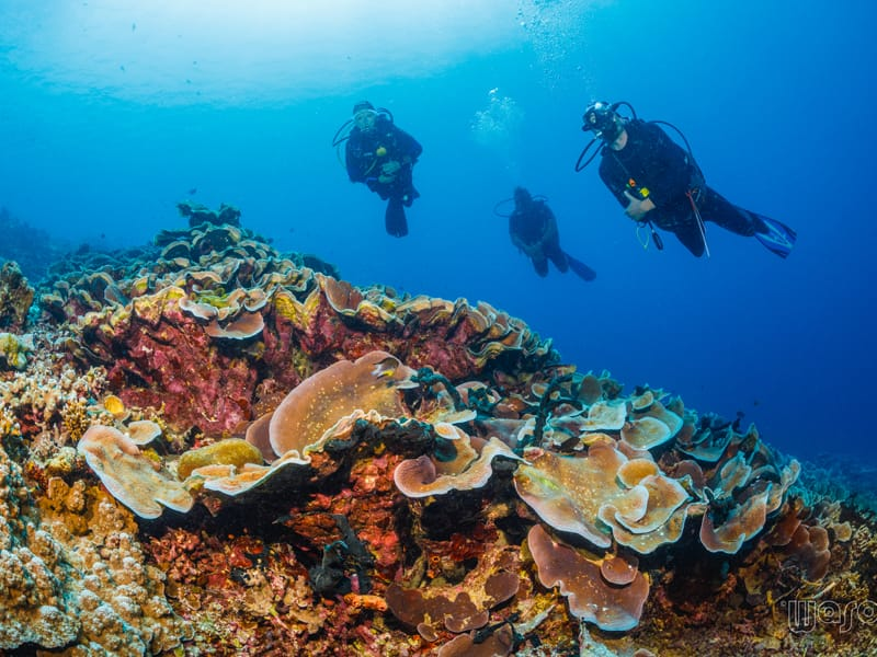 Divers hanging above table corals