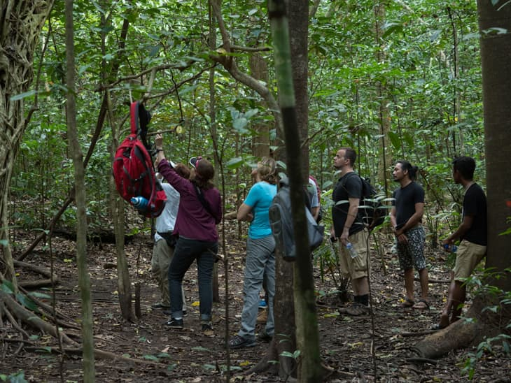 Hikers in the jungle finding the Tarsier